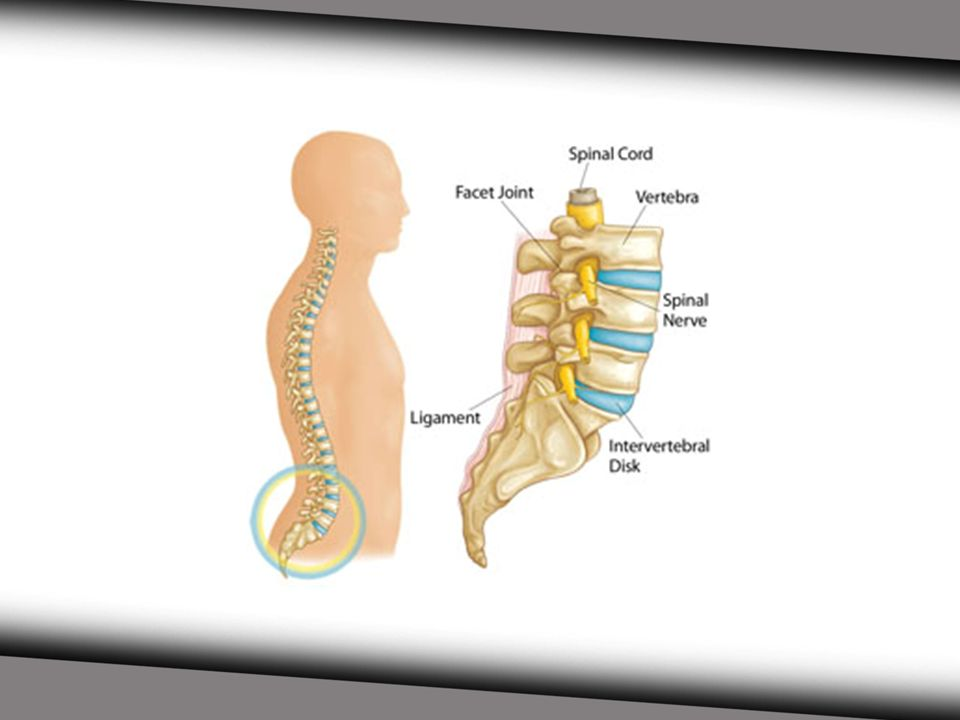 quiz lumbar vertebrae anatomy l1 to l5 - 960×720