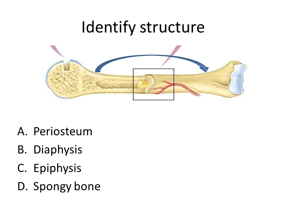 ch 5 review skeletal system identify structure a periosteum b