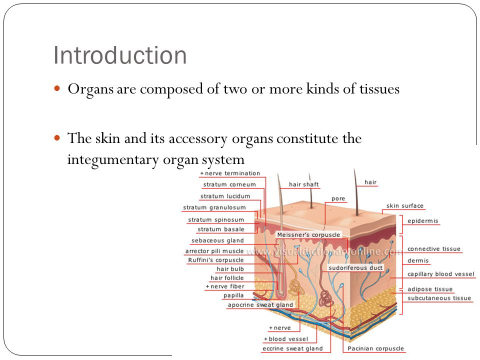 Chapter 6 Skin Integumentary System Introduction Organs Are