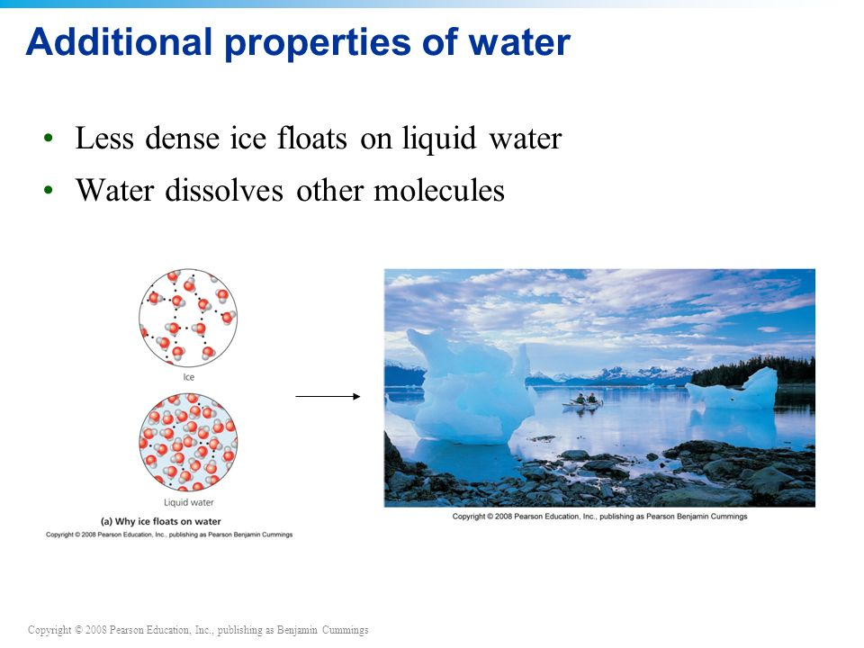 Copyright © 2008 Pearson Education, Inc., publishing as Benjamin Cummings Additional properties of water Less dense ice floats on liquid water Water dissolves other molecules