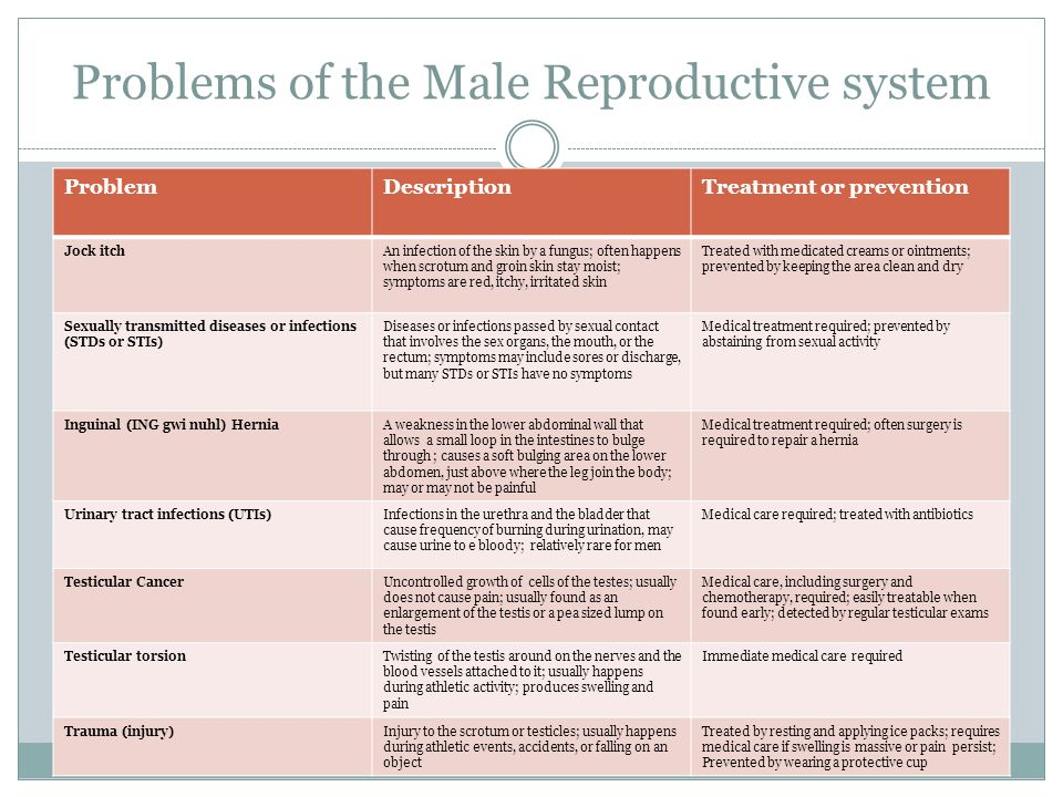The Reproductive System The Male Reproductive System Parts Of The Male Reproductive System Scrotum A Sac Of Skin That Hold The Testes And Regulates Ppt Download