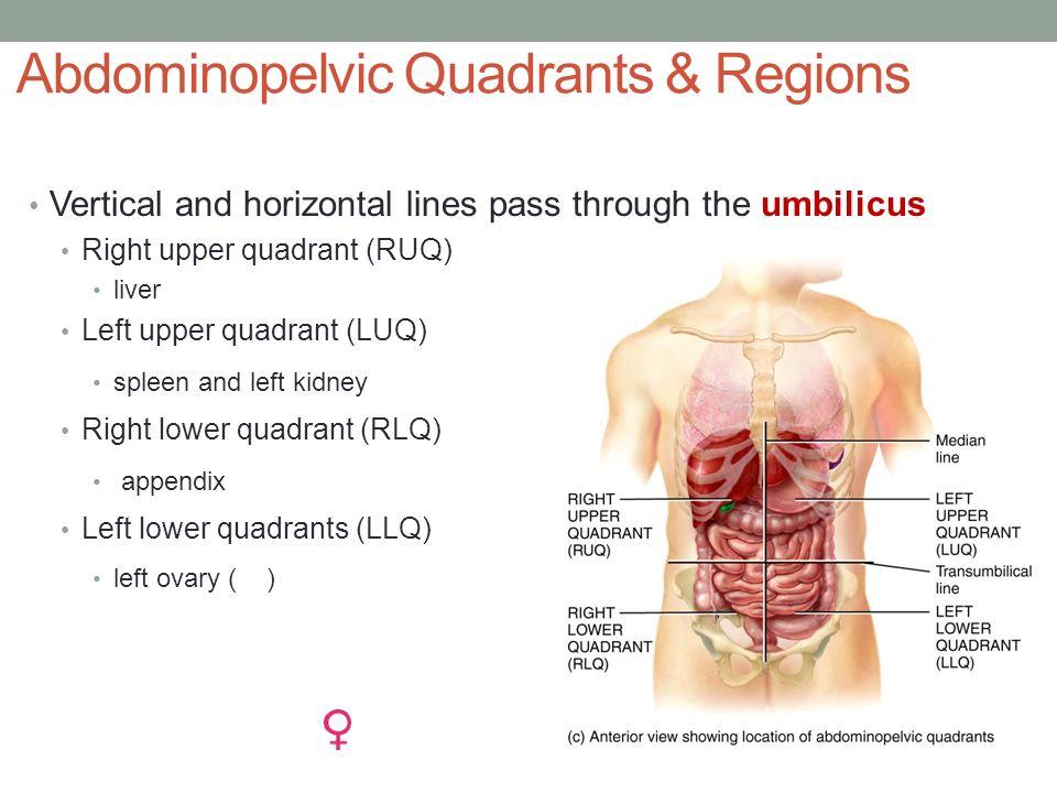 ANATOMICAL LANGUAGE BIO 137 Anatomy & Physiology I Lab. - ppt download
