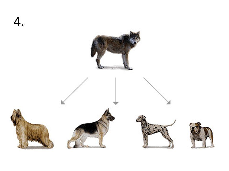 Hsc biology blueprint of life notes dot-point summary dux.