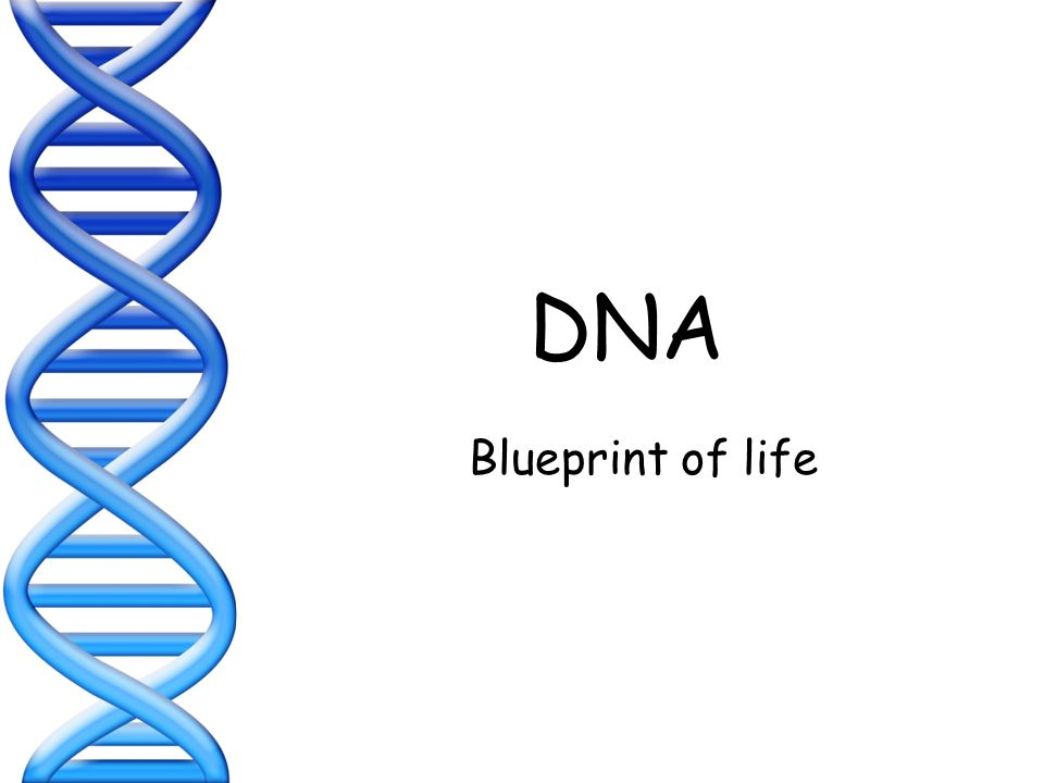 Dna blueprint of life dna deoxyribonucleic acid ppt download 1 dna blueprint of life malvernweather Choice Image