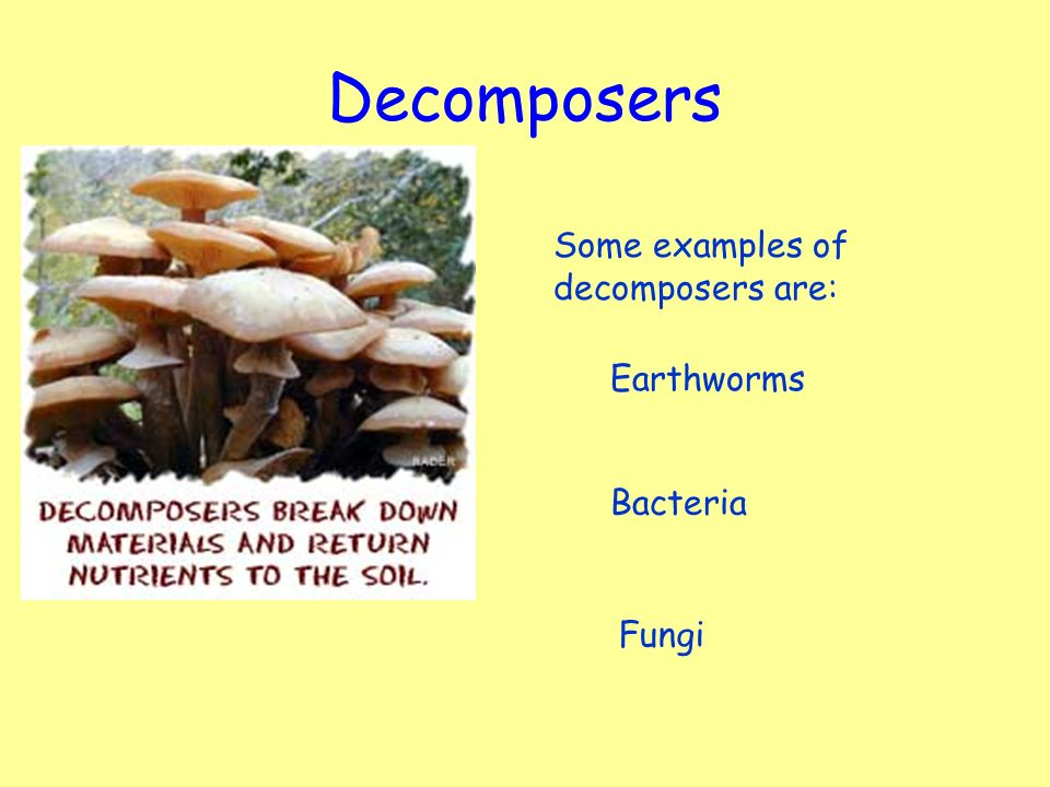 Learning Intention Explain That Decomposers Such As Bacteria And