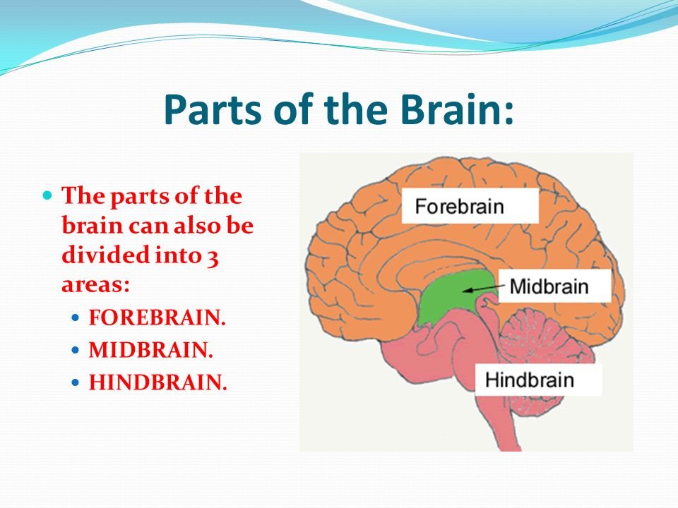 WebMDs Brain Anatomy Page provides a detailed diagram and definition of the brain including its function parts and conditions that affect it