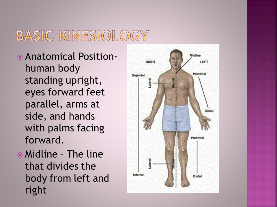 Kinesiology The Study Of Human Movement Brings Together Anatomy