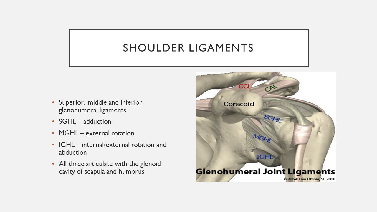 Synovial Joints Learning Goals I Will Be Able To Identify Ligaments