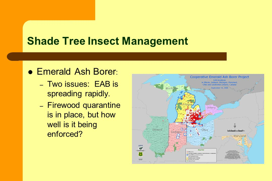Shade Tree Insect Management Emerald Ash Borer : – Two issues: EAB is spreading rapidly.