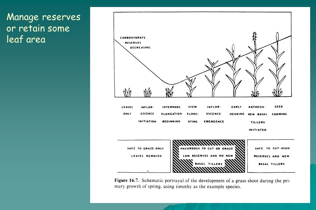 Manage reserves or retain some leaf area