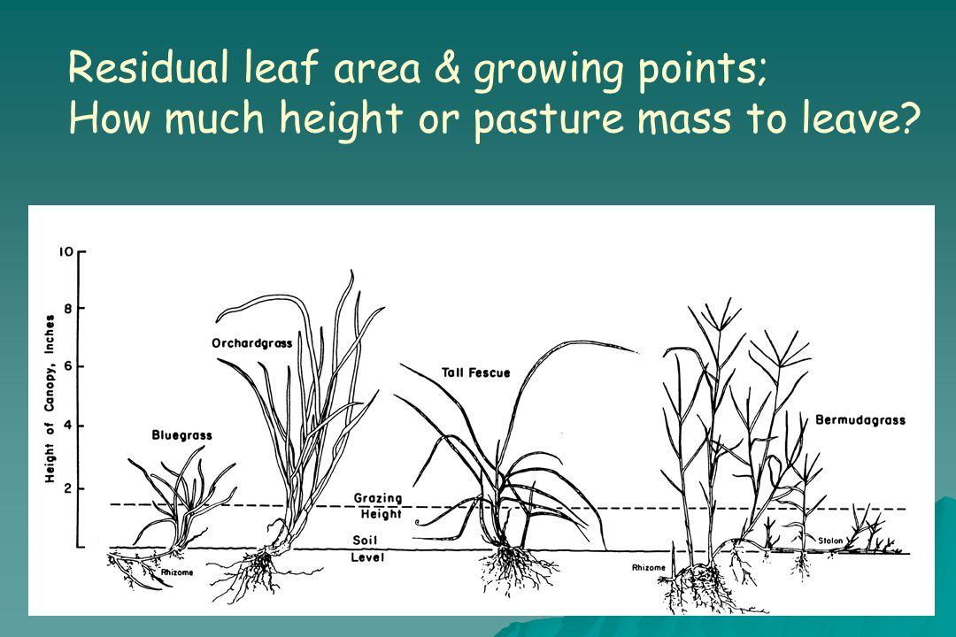 Residual leaf area & growing points; How much height or pasture mass to leave