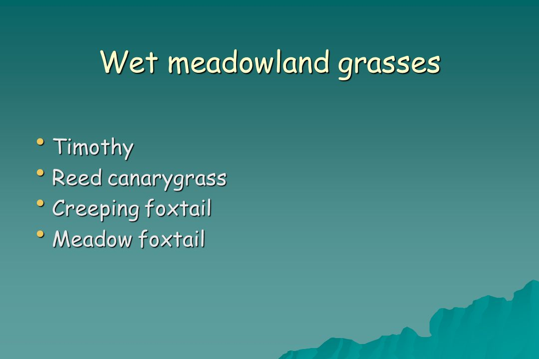 Wet meadowland grasses Timothy Timothy Reed canarygrass Reed canarygrass Creeping foxtail Creeping foxtail Meadow foxtail Meadow foxtail