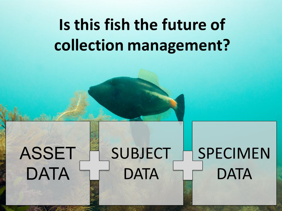 ASSET DATA ASSET DATA SUBJECT DATA SUBJECT DATA SPECIMEN DATA SPECIMEN DATA Is this fish the future of collection management