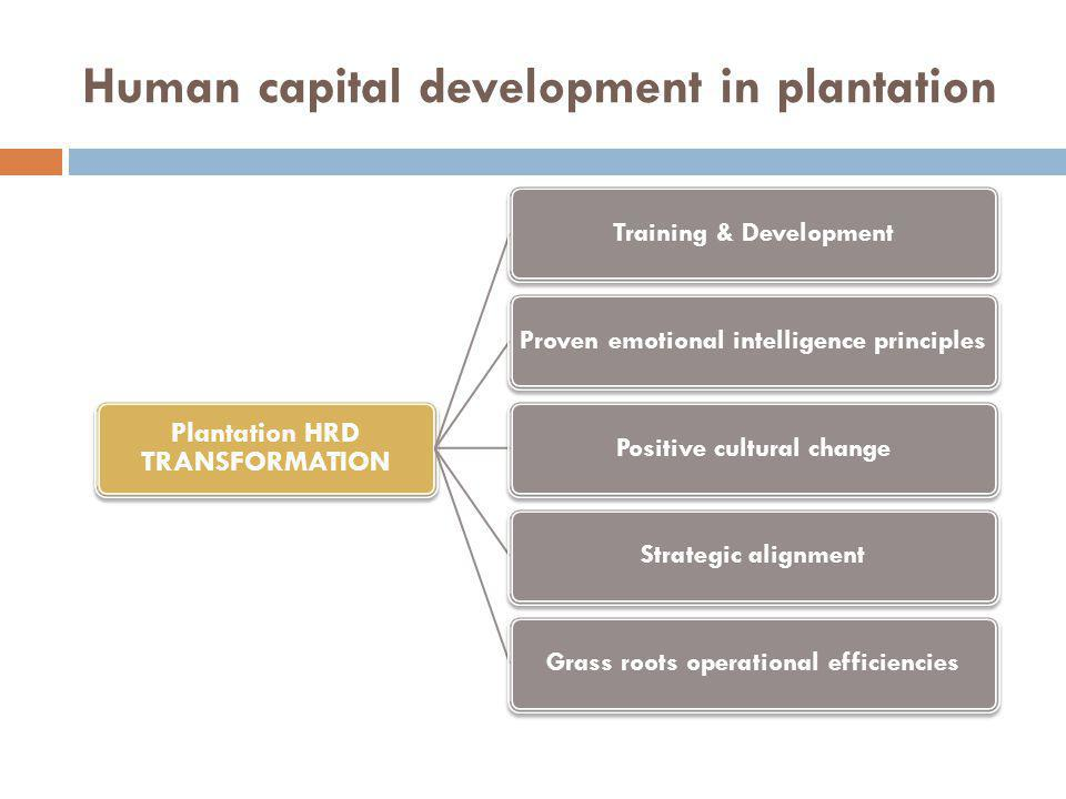 Human capital development in plantation Plantation HRD TRANSFORMATION Training & DevelopmentProven emotional intelligence principlesPositive cultural changeStrategic alignmentGrass roots operational efficiencies
