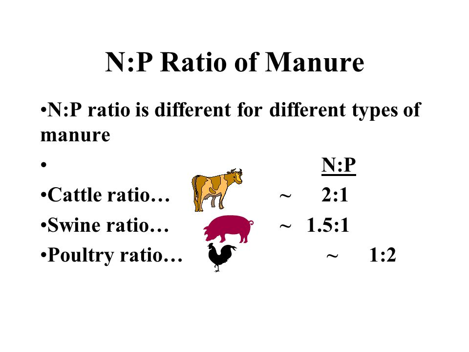 N:P Ratio of Manure N:P ratio is different for different types of manure N:P Cattle ratio… ~ 2:1 Swine ratio… ~ 1.5:1 Poultry ratio… ~ 1:2