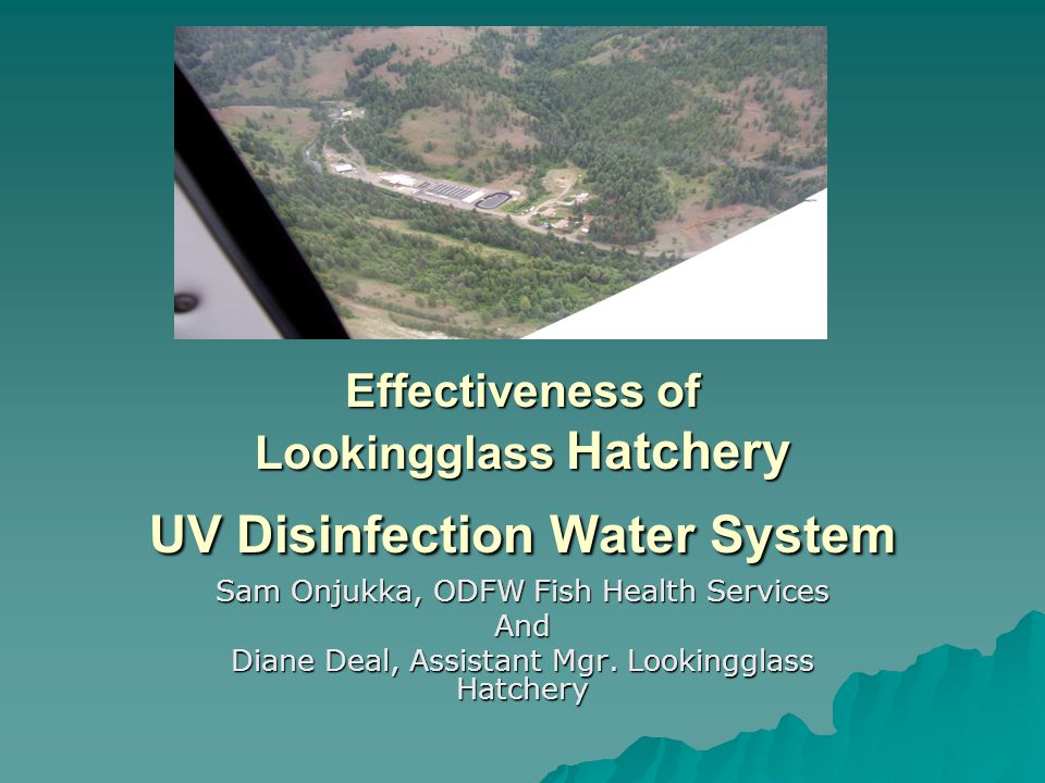 Effectiveness of Lookingglass Hatchery UV Disinfection Water System Sam Onjukka, ODFW Fish Health Services And Diane Deal, Assistant Mgr.