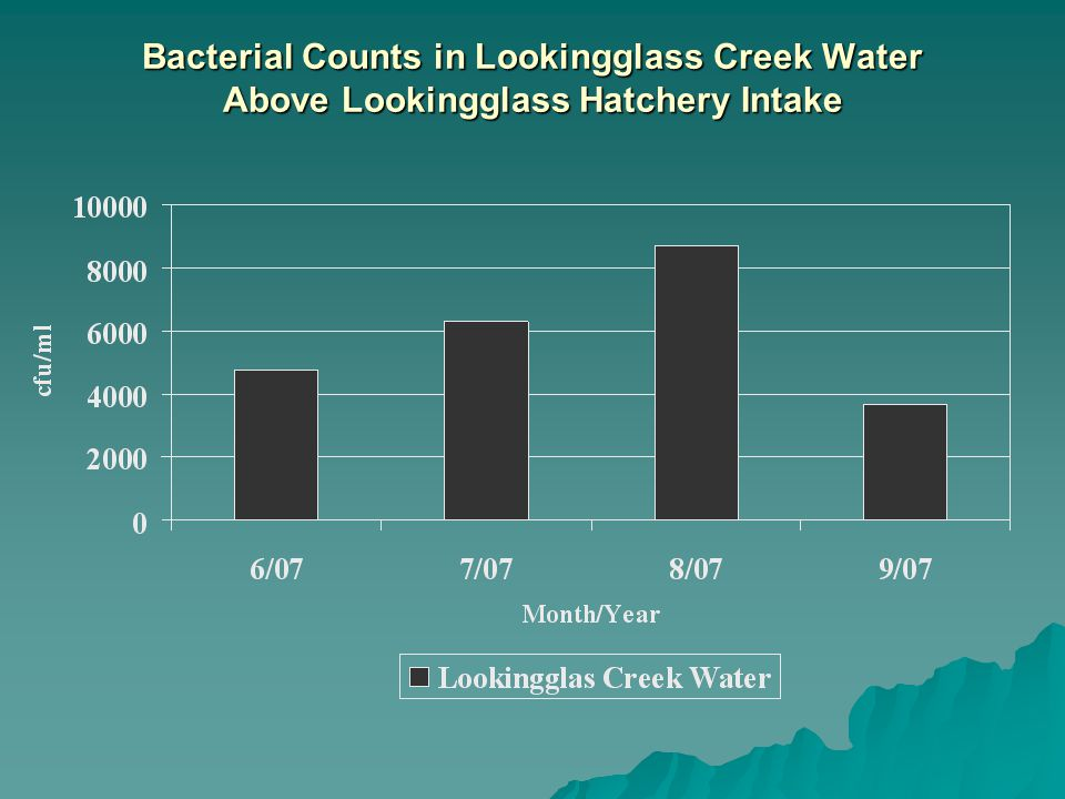 Bacterial Counts in Lookingglass Creek Water Above Lookingglass Hatchery Intake