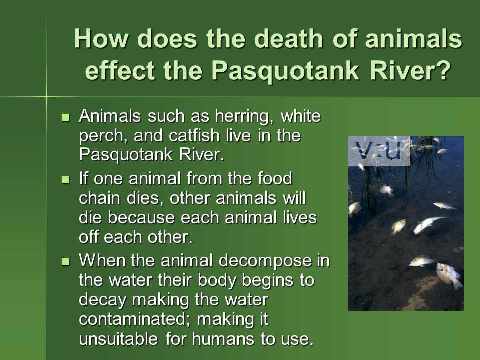 How does the death of animals effect the Pasquotank River.