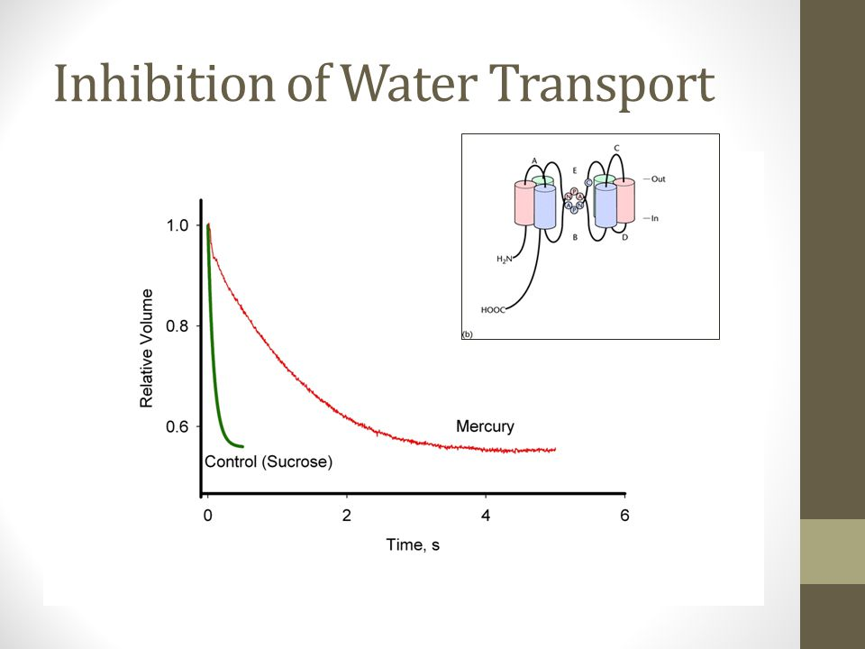 Inhibition of Water Transport