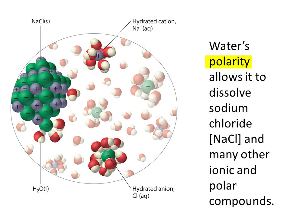 Waters polarity allows it to dissolve sodium chloride [NaCl] and many other ionic and polar compounds.