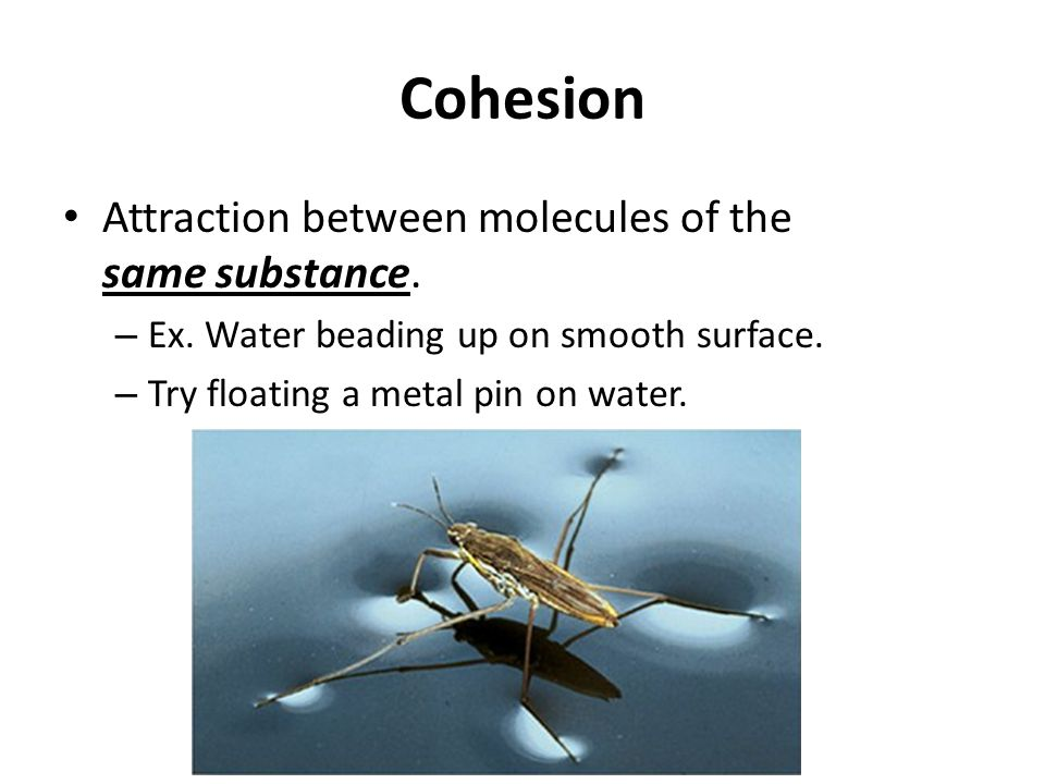 Cohesion Attraction between molecules of the same substance.