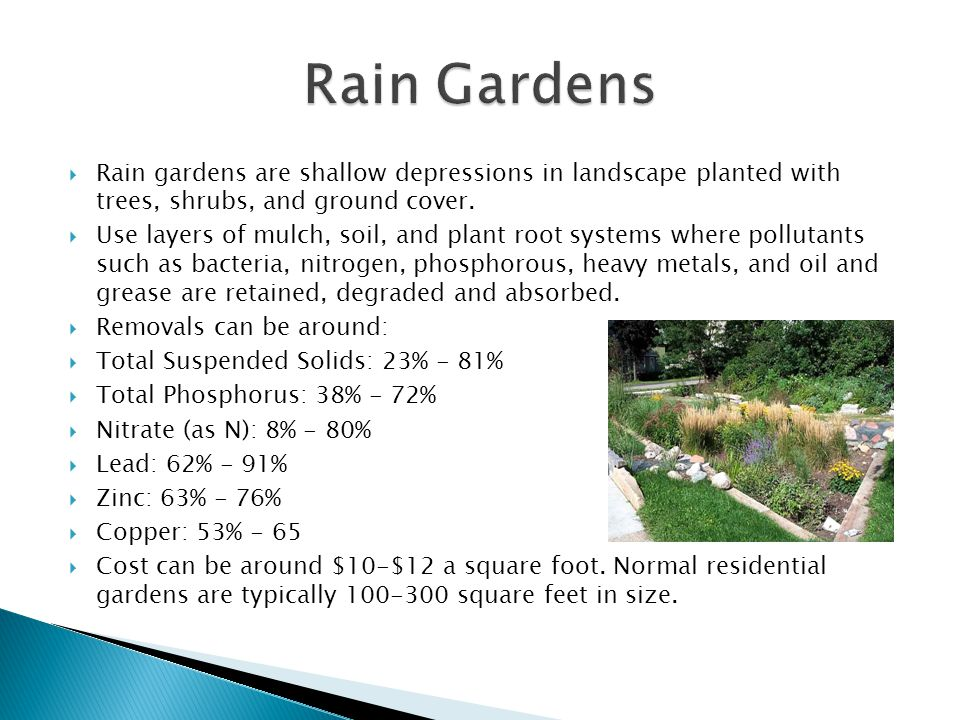 Rain gardens are shallow depressions in landscape planted with trees, shrubs, and ground cover.