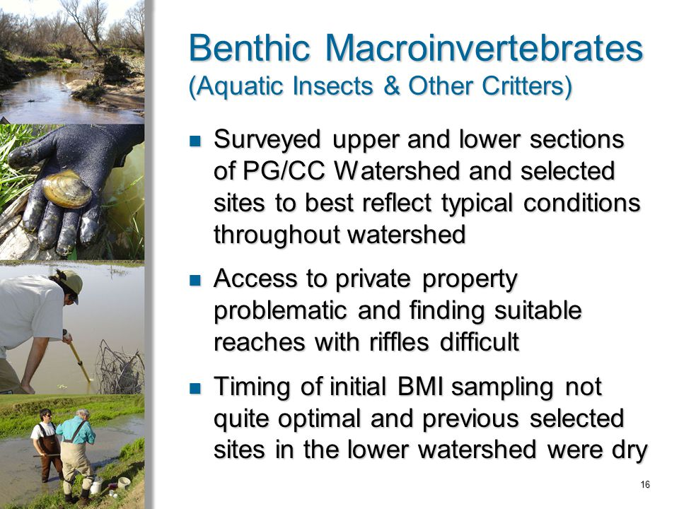 16 Benthic Macroinvertebrates (Aquatic Insects & Other Critters) Surveyed upper and lower sections of PG/CC Watershed and selected sites to best reflect typical conditions throughout watershed Surveyed upper and lower sections of PG/CC Watershed and selected sites to best reflect typical conditions throughout watershed Access to private property problematic and finding suitable reaches with riffles difficult Access to private property problematic and finding suitable reaches with riffles difficult Timing of initial BMI sampling not quite optimal and previous selected sites in the lower watershed were dry Timing of initial BMI sampling not quite optimal and previous selected sites in the lower watershed were dry