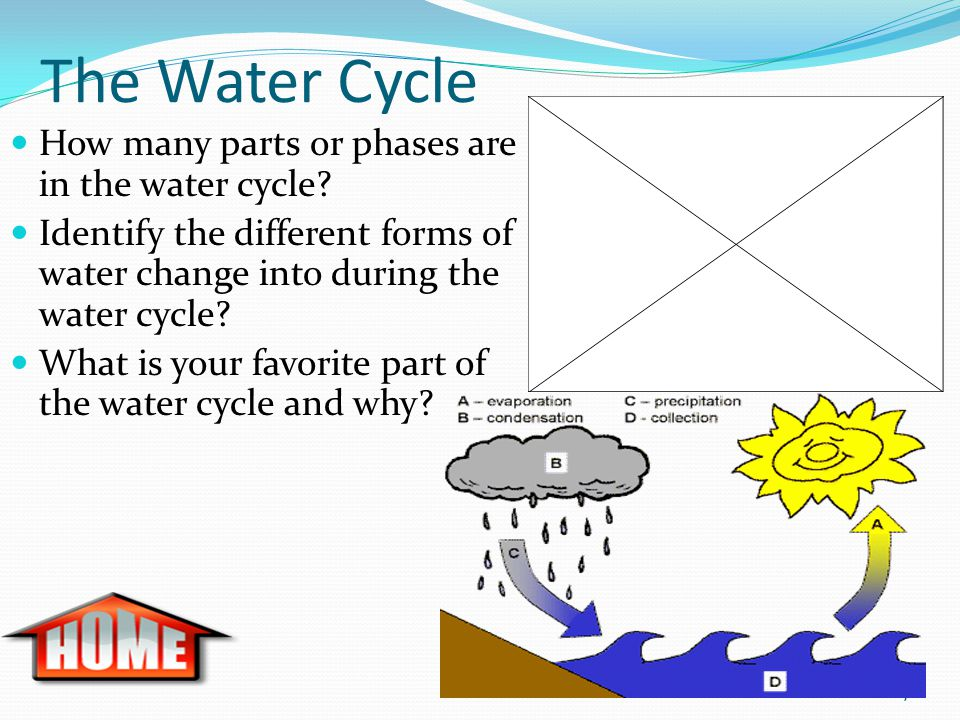 The Water Cycle How many parts or phases are in the water cycle.