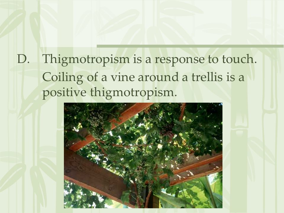 D.Thigmotropism is a response to touch.