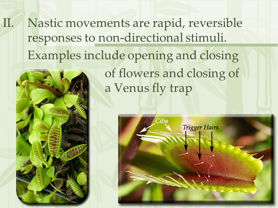 II.Nastic movements are rapid, reversible responses to non-directional stimuli.