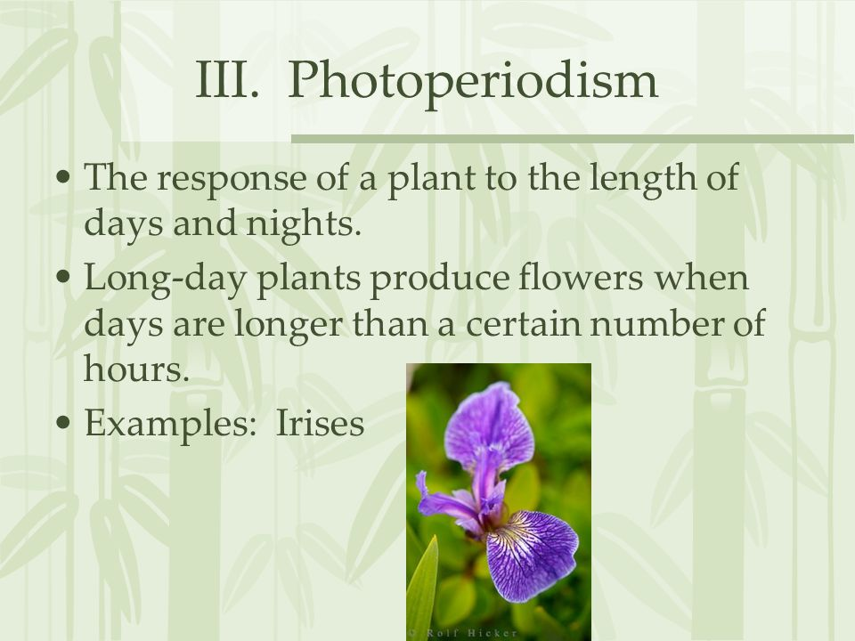 III. Photoperiodism The response of a plant to the length of days and nights.
