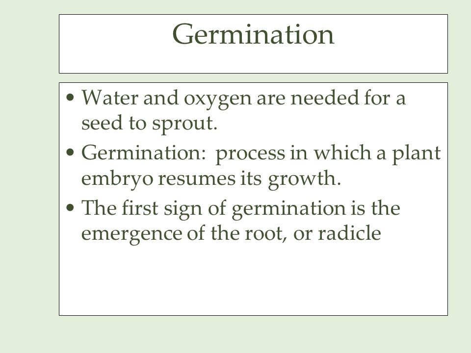 Germination Water and oxygen are needed for a seed to sprout.