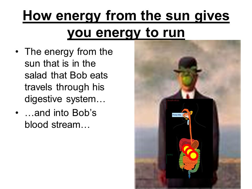 How energy from the sun gives you energy to run The energy from the sun that is in the salad that Bob eats travels through his digestive system… …and into Bobs blood stream…