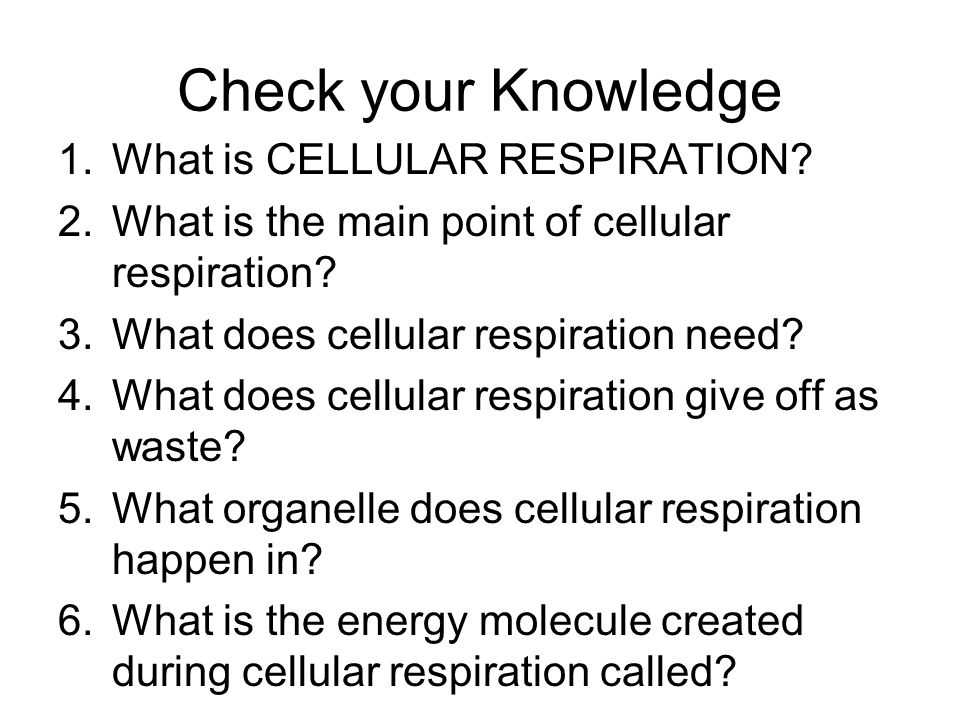 Check your Knowledge 1.What is CELLULAR RESPIRATION.