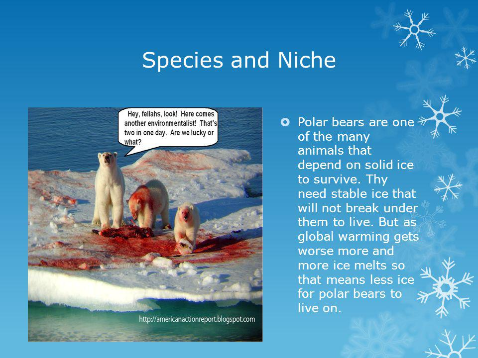 Species and Niche Polar bears are one of the many animals that depend on solid ice to survive.