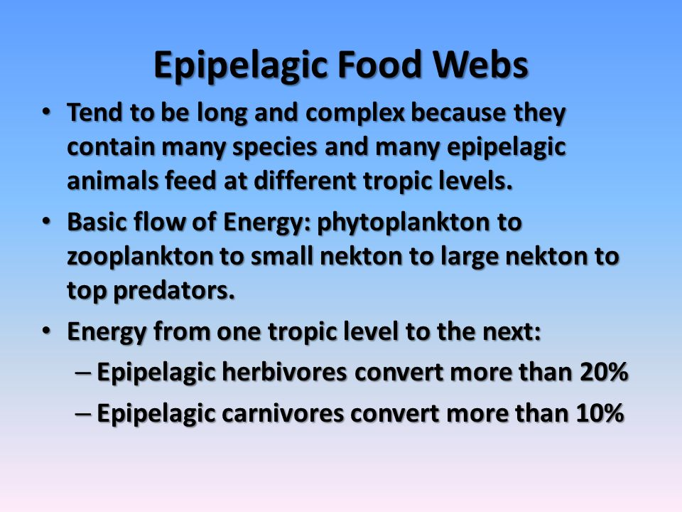 Epipelagic Food Webs Tend to be long and complex because they contain many species and many epipelagic animals feed at different tropic levels.