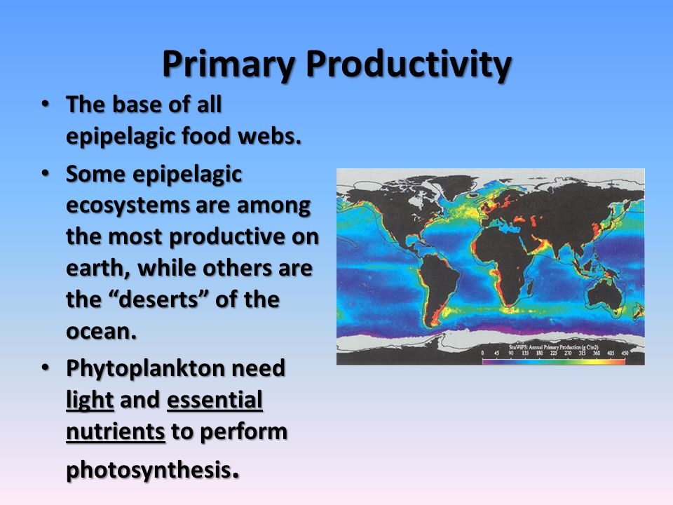 Primary Productivity The base of all epipelagic food webs.