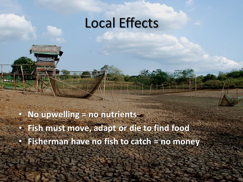 Local Effects No upwelling = no nutrients No upwelling = no nutrients Fish must move, adapt or die to find food Fish must move, adapt or die to find food Fisherman have no fish to catch = no money Fisherman have no fish to catch = no money