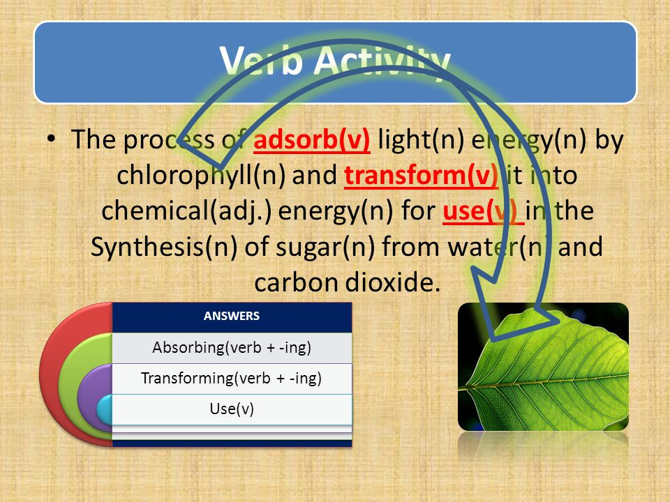 Verb Activity The process of adsorb(v) light(n) energy(n) by chlorophyll(n) and transform(v) it into chemical(adj.) energy(n) for use(v) in the Synthesis(n) of sugar(n) from water(n) and carbon dioxide.