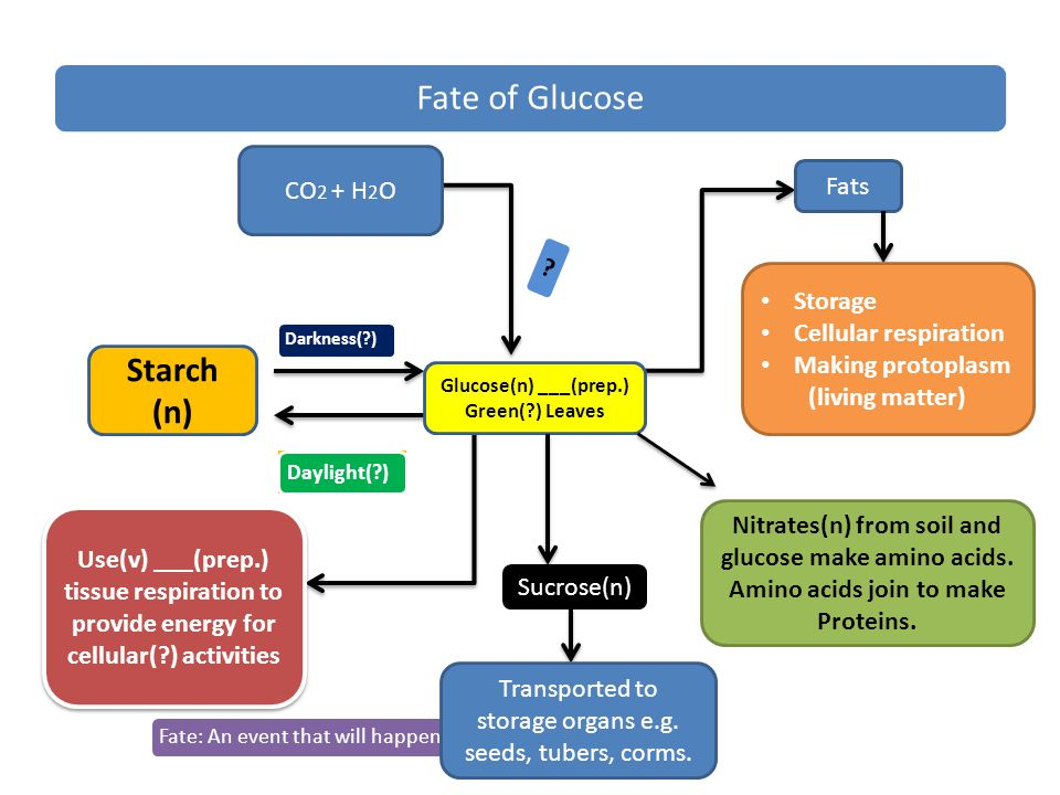 Fate of Glucose Fate: An event that will happen in the future.