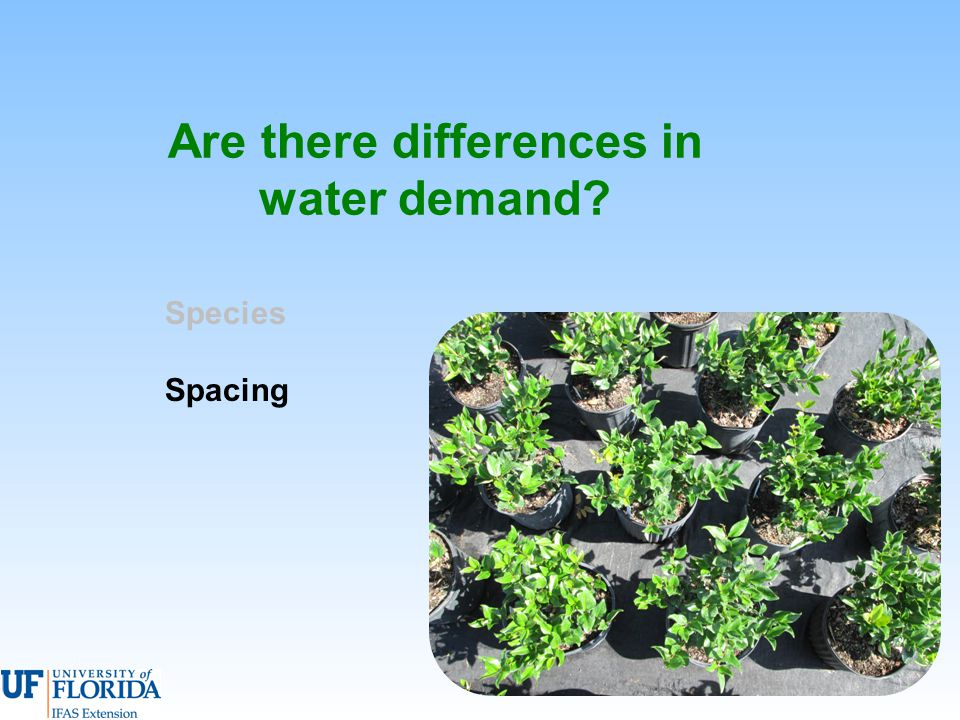 Are there differences in water demand Species Spacing