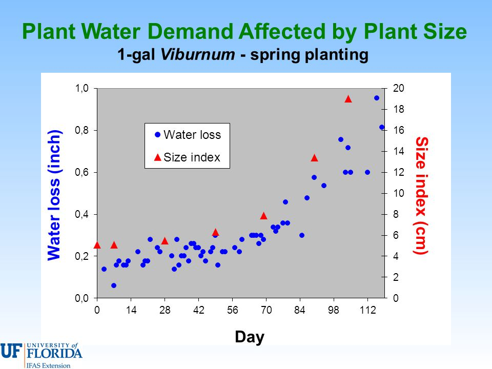 Plant Water Demand Affected by Plant Size 1-gal Viburnum - spring planting Day Water loss (inch) Size index (cm)