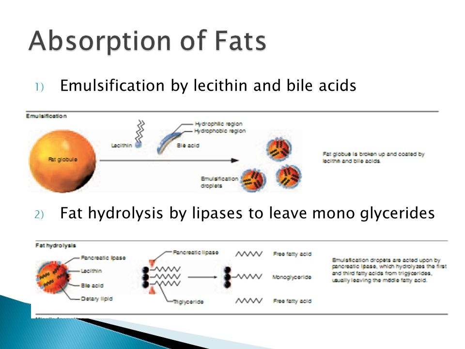 1) Emulsification by lecithin and bile acids 2) Fat hydrolysis by lipases to leave mono glycerides