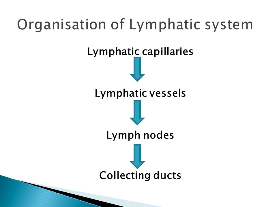 Lymphatic capillaries Lymphatic vessels Lymph nodes Collecting ducts