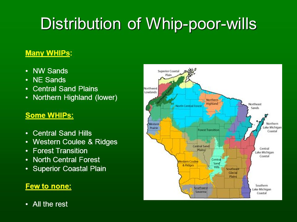 Distribution of Whip-poor-wills Many WHIPs: NW Sands NE Sands Central Sand Plains Northern Highland (lower) Some WHIPs: Central Sand Hills Western Coulee & Ridges Forest Transition North Central Forest Superior Coastal Plain Few to none: All the rest