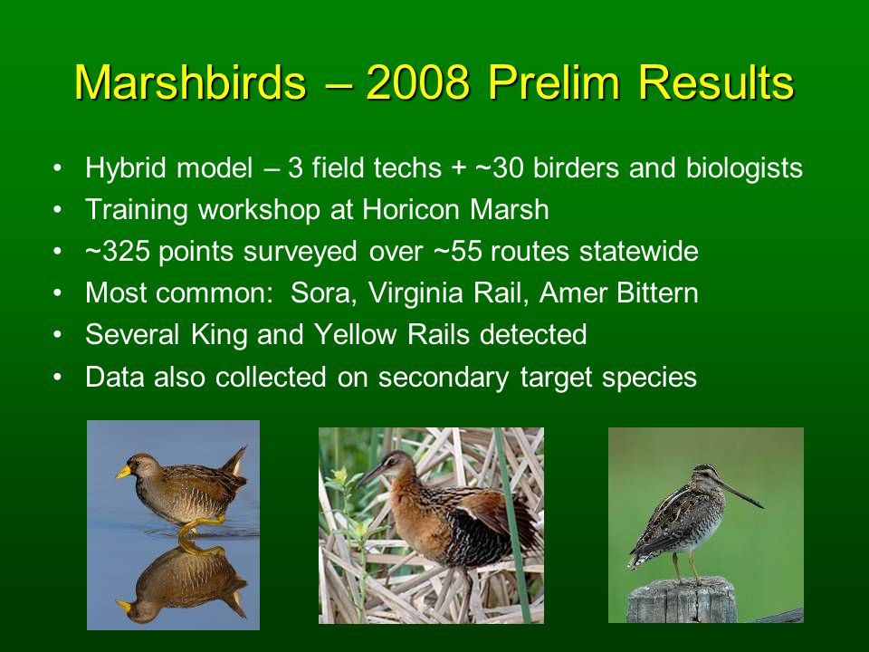 Marshbirds – 2008 Prelim Results Hybrid model – 3 field techs + ~30 birders and biologists Training workshop at Horicon Marsh ~325 points surveyed over ~55 routes statewide Most common: Sora, Virginia Rail, Amer Bittern Several King and Yellow Rails detected Data also collected on secondary target species