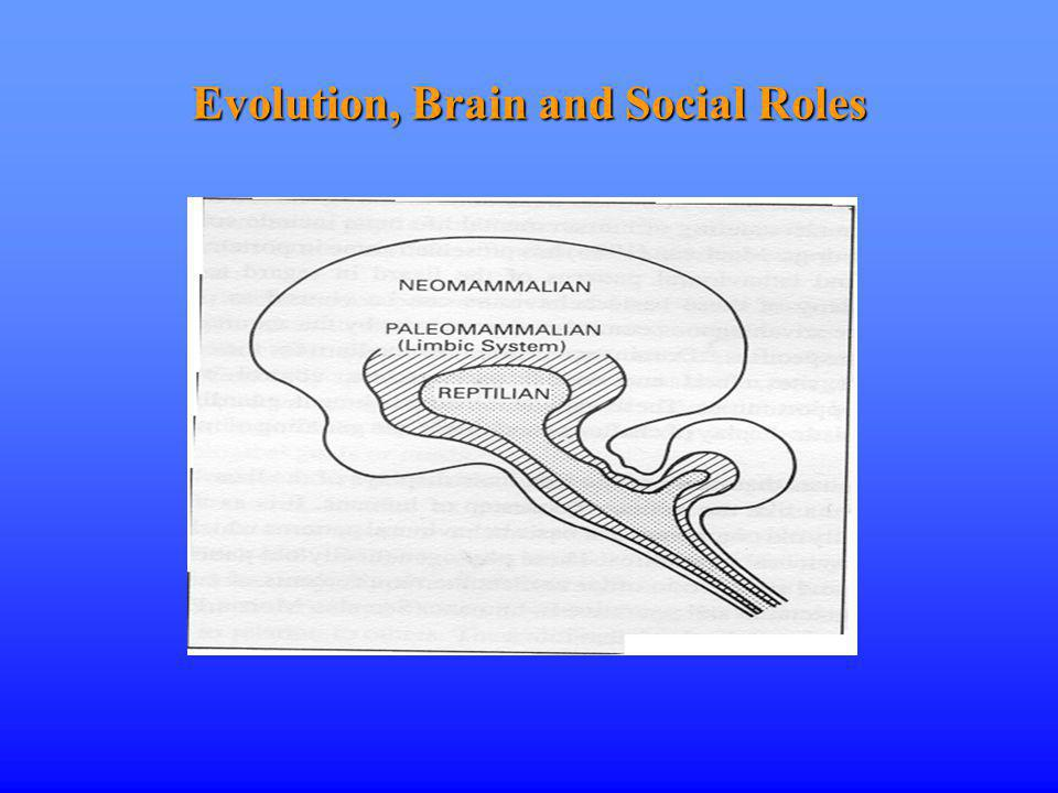 Evolution, Brain and Social Roles