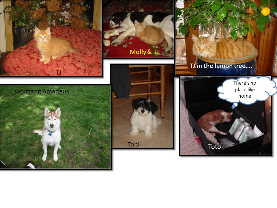 TJ Molly & TJ TJ in the lemon tree…. Tobi Theres no place like home Toto Wolfgang Amadeus