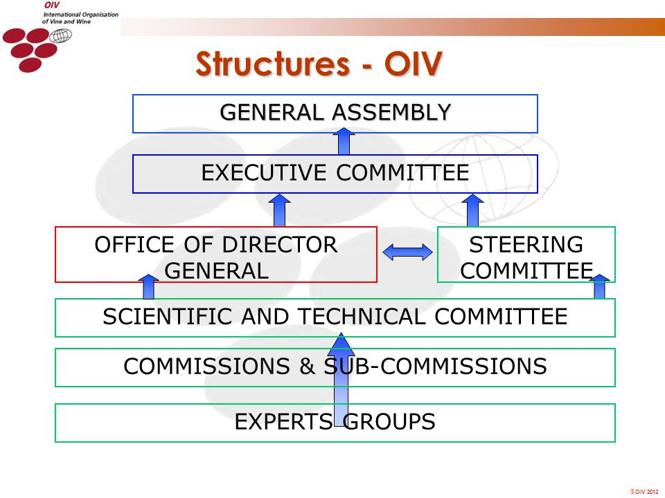 OIV 2012 Structures - OIV GENERAL ASSEMBLY EXECUTIVE COMMITTEE SCIENTIFIC AND TECHNICAL COMMITTEE EXPERTS GROUPS COMMISSIONS & SUB-COMMISSIONS STEERING COMMITTEE OFFICE OF DIRECTOR GENERAL
