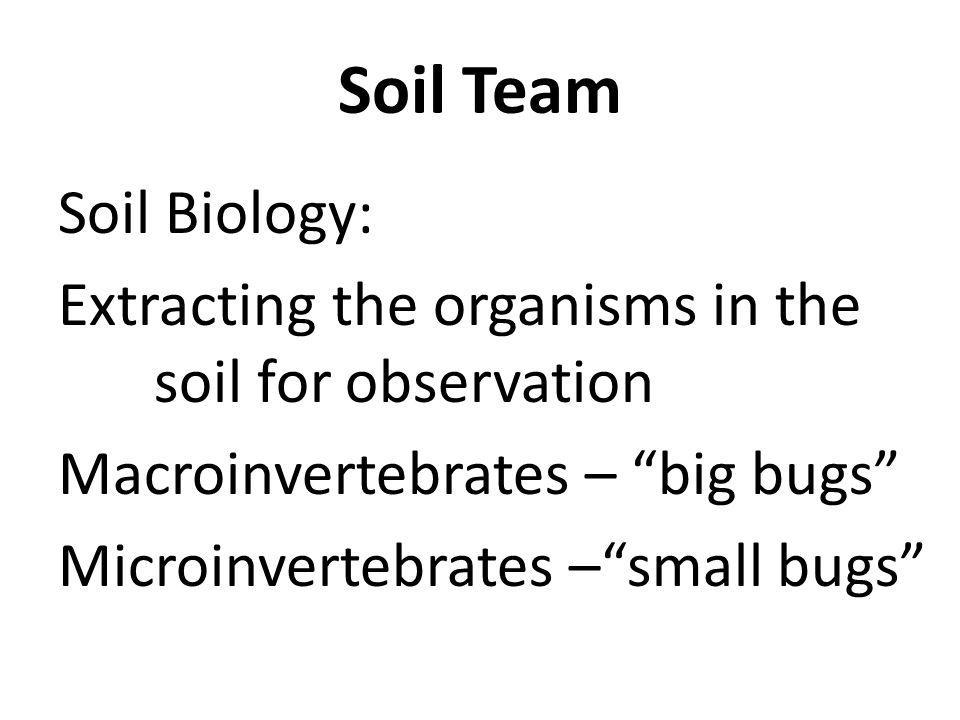 Soil Biology: Extracting the organisms in the soil for observation Macroinvertebrates – big bugs Microinvertebrates –small bugs Soil Team
